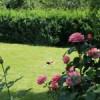 Трава газонная: купить семена