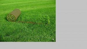 Канада Грин купить газоны