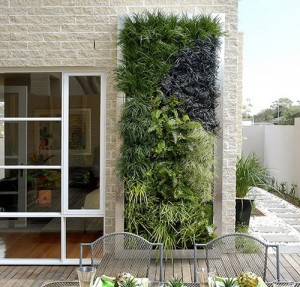 Вертикальное озеленение (1)