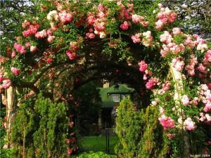 Дизайн в саду фото