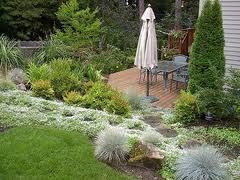 Дизайн газона