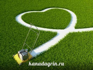 Правила уход за газоном весной
