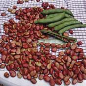 Семена почтой Украина